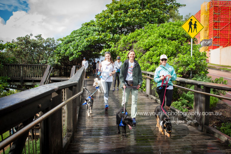 RSPCA Million Paws Walk Coolum Boardwalk